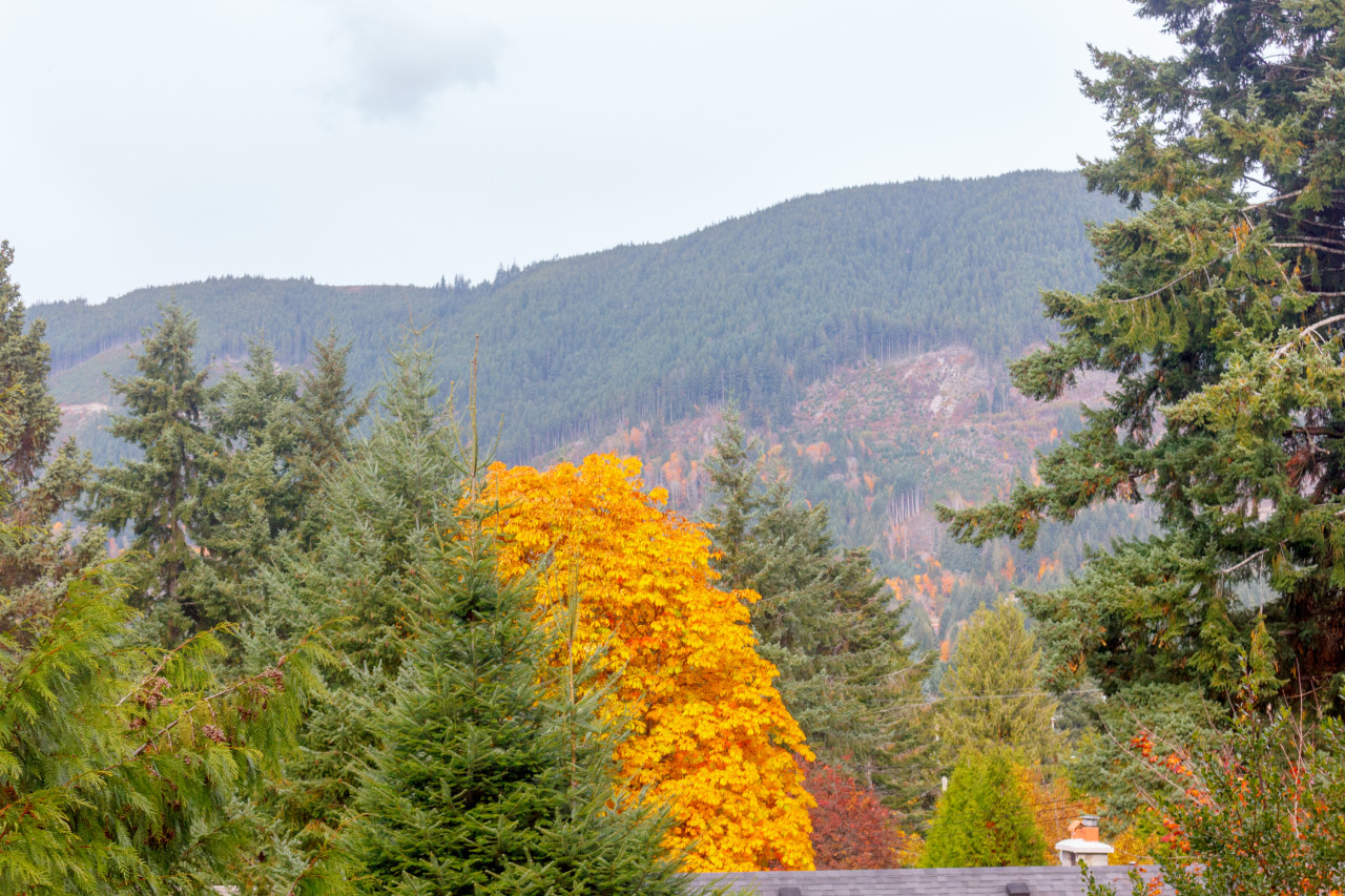 100&102 Comiaken Ave, Lake Cowichan, British Columbia  V0R 2G0 - Photo 18 - 462720